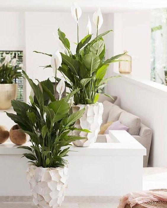 Plantas fáceis de cuidar